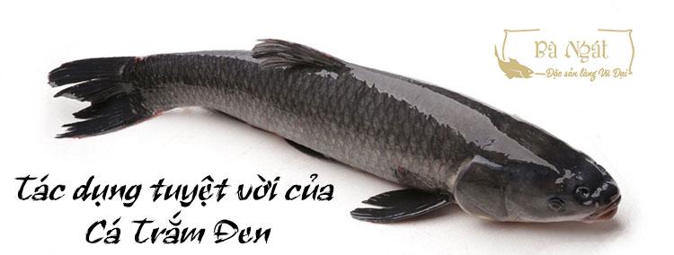 Tác Dụng Tuyệt Vời Của Cá Trắm đen Như Thế Nào?